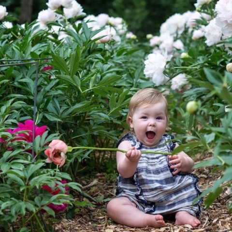 babies, peonies, garden, summer